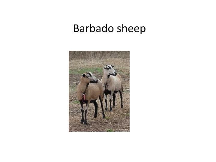 Barbado