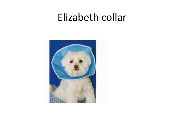 Elizabeth collar