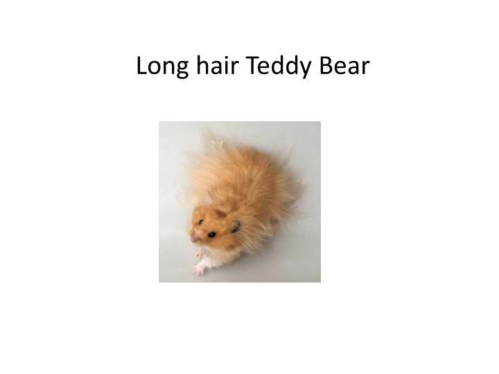 Long hair Teddy Bear