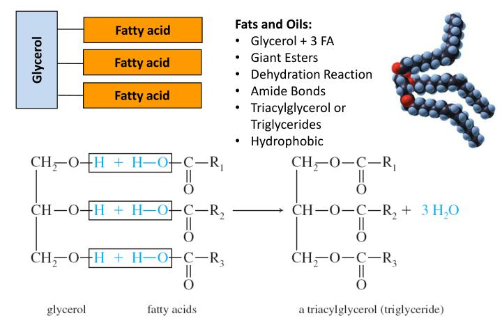 Fats and Oils: