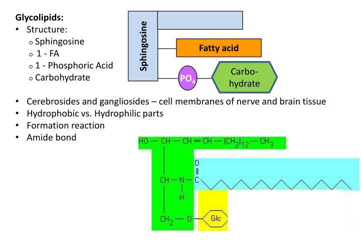 Glycolipids: