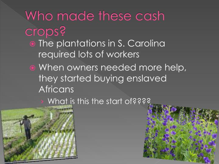 Who made these cash crops?