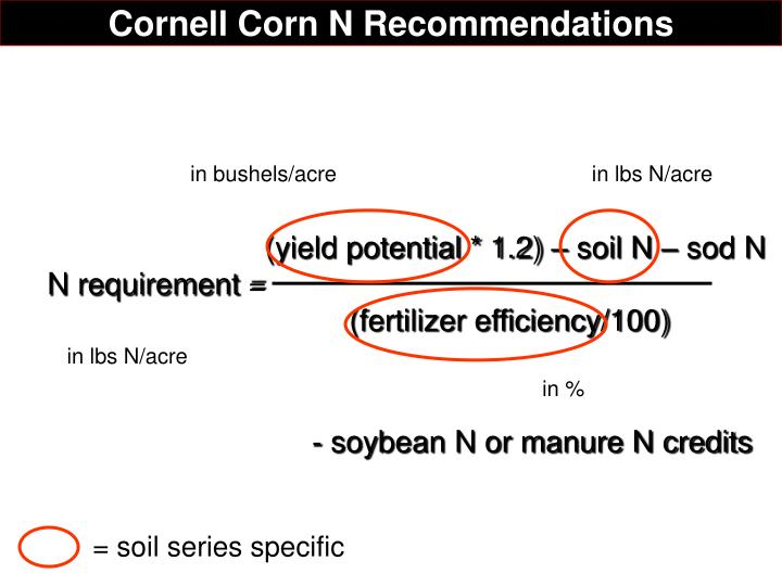 Cornell Corn N Recommendations
