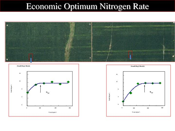 Economic Optimum Nitrogen Rate