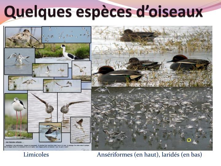 Quelques espèces d'oiseaux