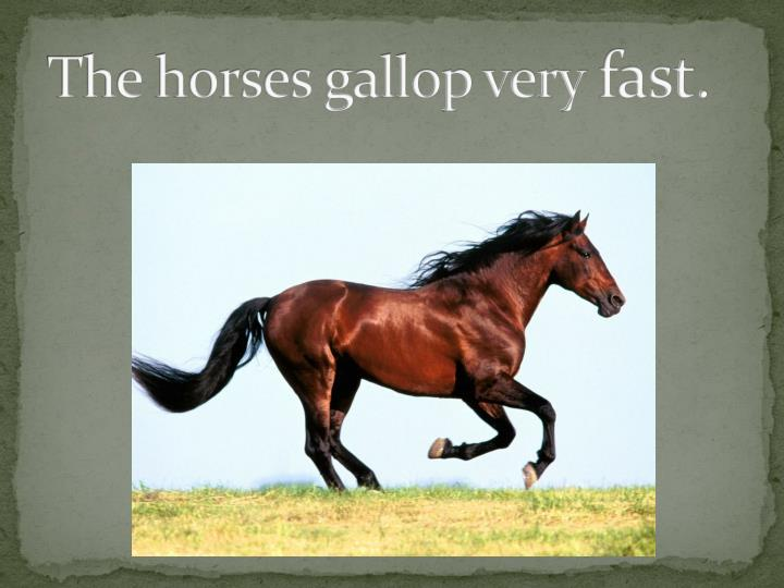 The horses gallop very fast