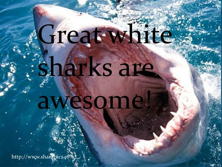 Great white sharks are awesome!
