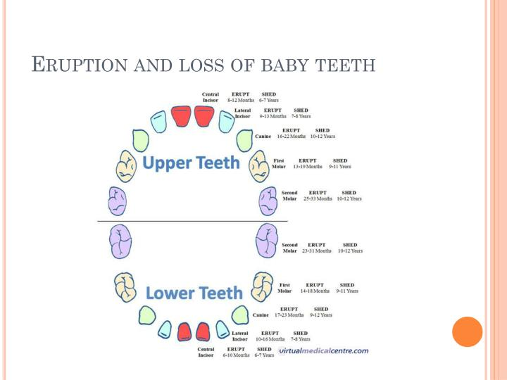 Eruption and loss of baby teeth
