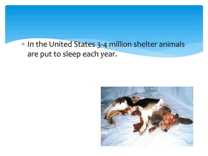 In the United States 3-4 million shelter animals are put to sleep each year.