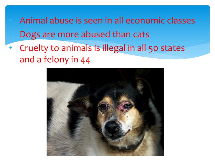 Animal abuse is seen in all economic classes