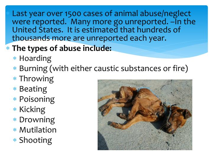 Last year over 1500 cases of animal abuse/neglect were reported.  Many more go unreported. –In the United States.  It is estimated that hundreds of thousands more are unreported each year.