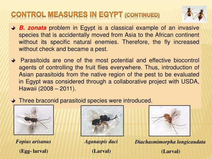Control Measures in Egypt