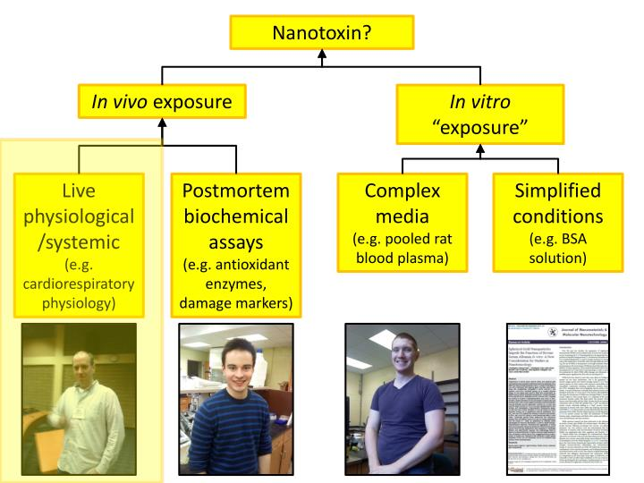 Nanotoxin?