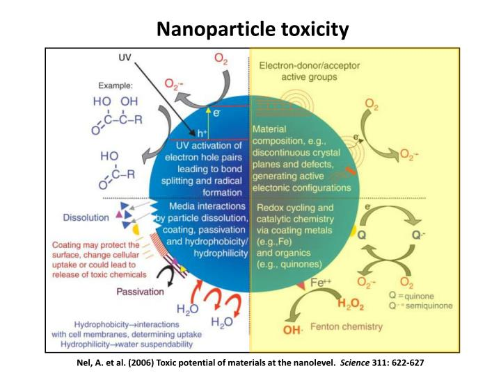 Nanoparticle toxicity