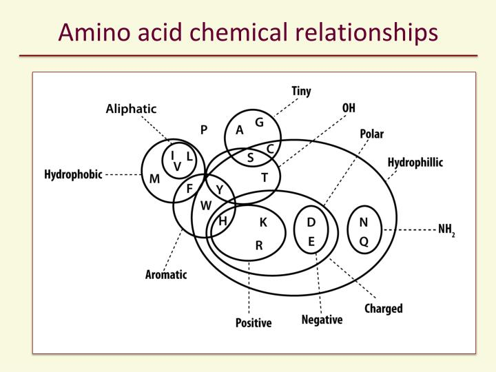 Amino acid chemical relationships