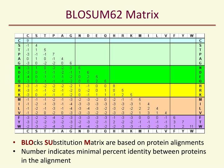 BLOSUM62 Matrix