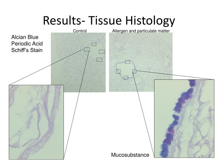 Results- Tissue Histology