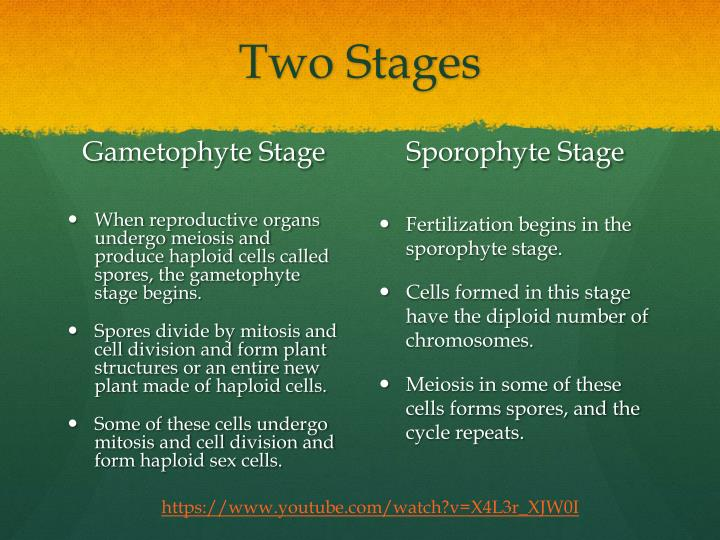 Two Stages