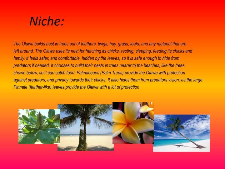 Niche: