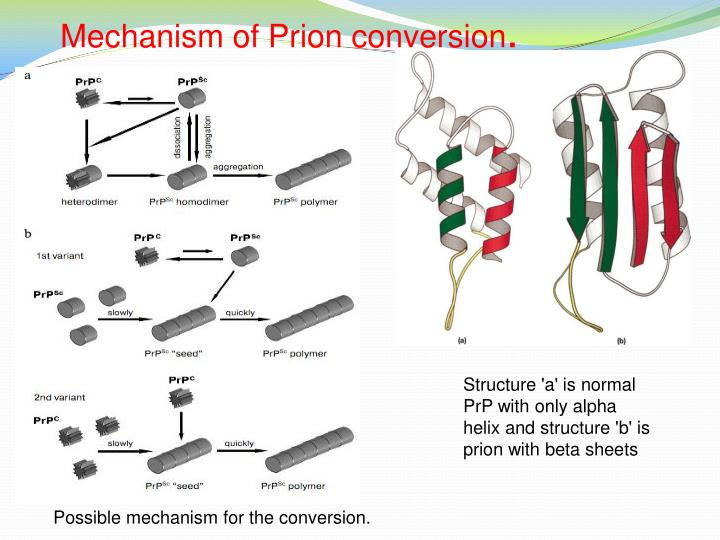 Mechanism of prion conversion
