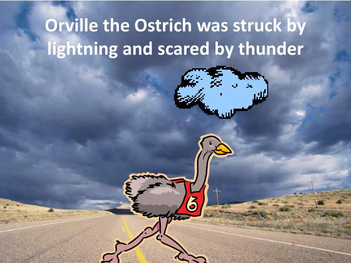 Orville the ostrich was struck by lightning and scared by thunder