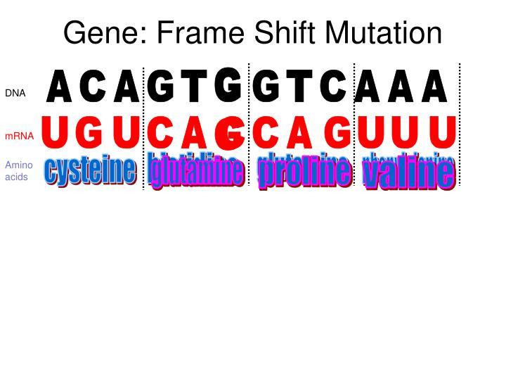 Gene: Frame Shift Mutation