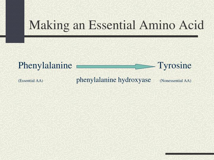 Making an Essential Amino Acid