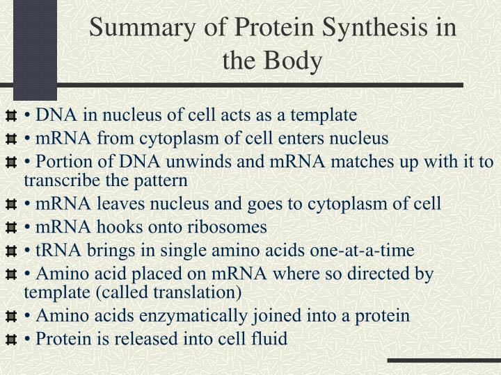 Summary of Protein Synthesis in