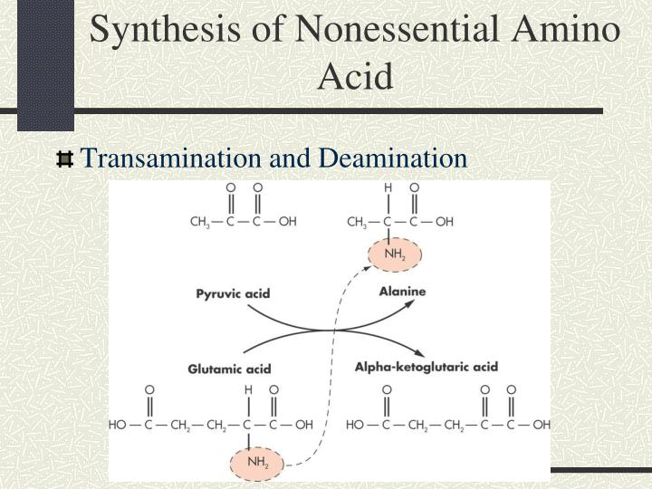 Synthesis of Nonessential Amino Acid