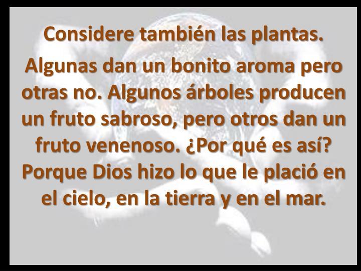 Considere también las plantas.