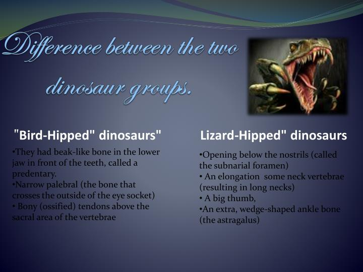 Difference between the two dinosaur groups.