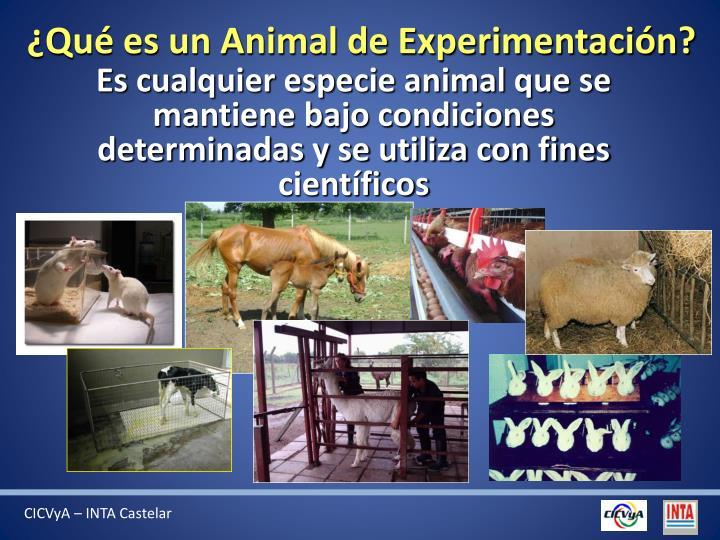 ¿Qué es un Animal de Experimentación?