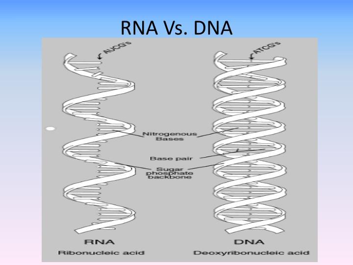 RNA Vs. DNA
