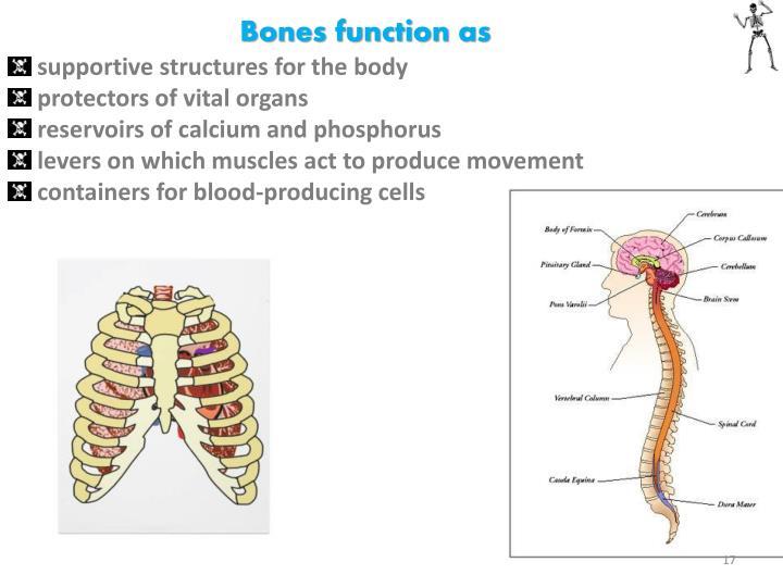Bones function