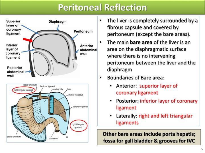 Duodenum anatomy ppt