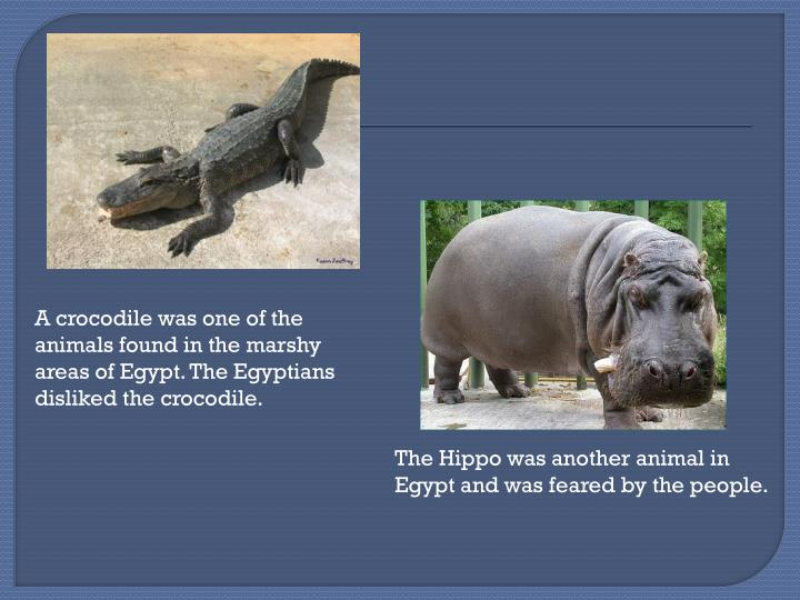 A crocodile was one of the animals found in the marshy areas of Egypt. The Egyptians disliked the crocodile.