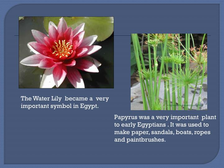 The Water Lily  became a  very important symbol in Egypt.