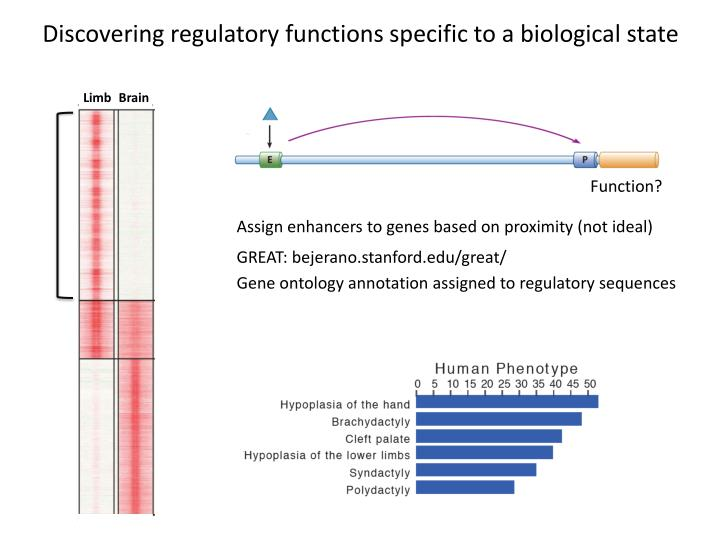 Discovering regulatory functions specific to a biological state