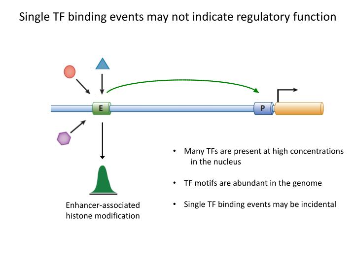 Single TF binding events may not indicate regulatory function