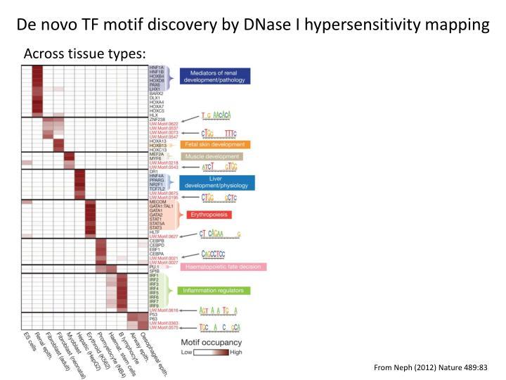 De novo TF motif discovery by