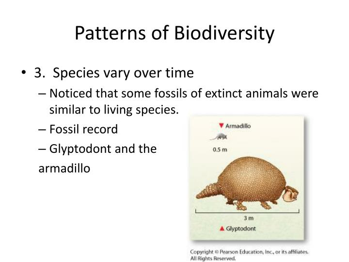 Patterns of Biodiversity