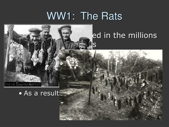 WW1:  The Rats