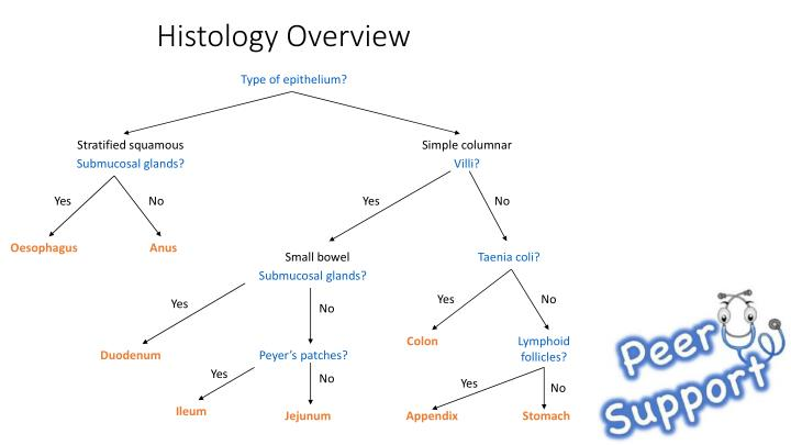 Histology Overview