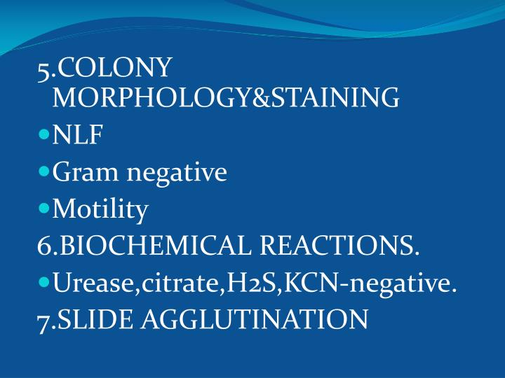 5.COLONY MORPHOLOGY&STAINING