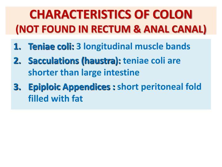 CHARACTERISTICS OF COLON