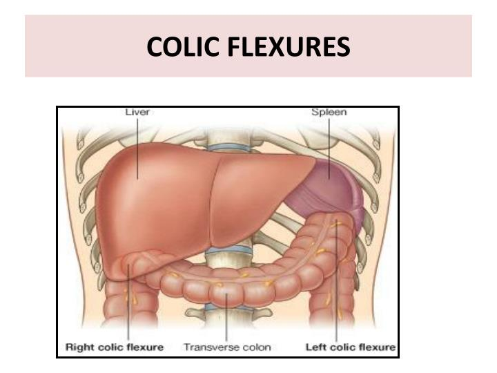 COLIC FLEXURES