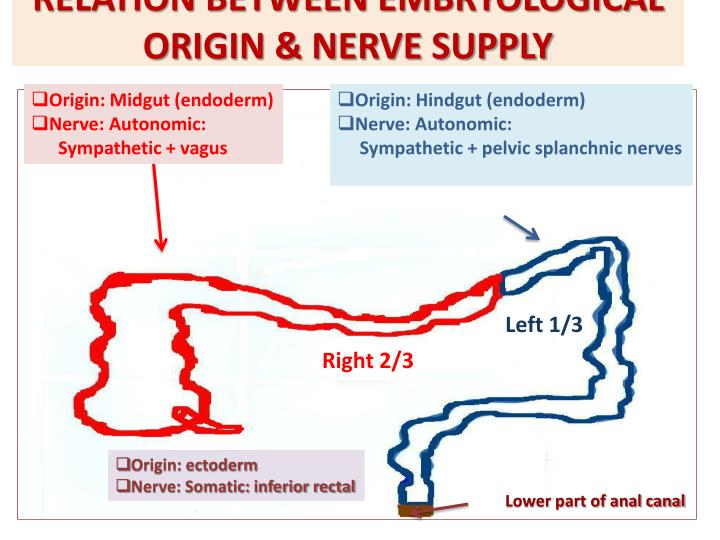RELATION BETWEEN EMBRYOLOGICAL ORIGIN & NERVE SUPPLY