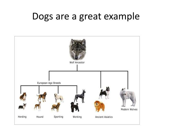 Dogs are a great example