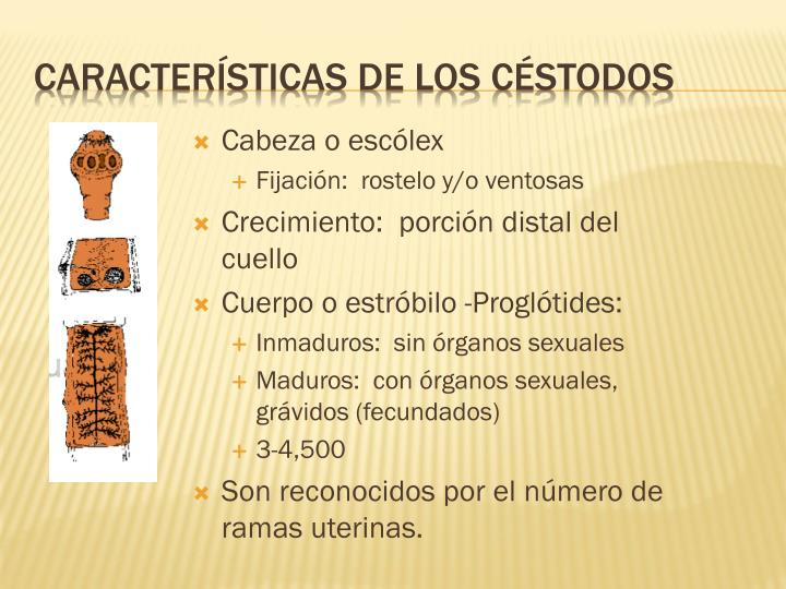 Características de los