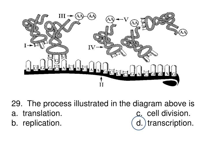 29.  The process illustrated in the diagram above is